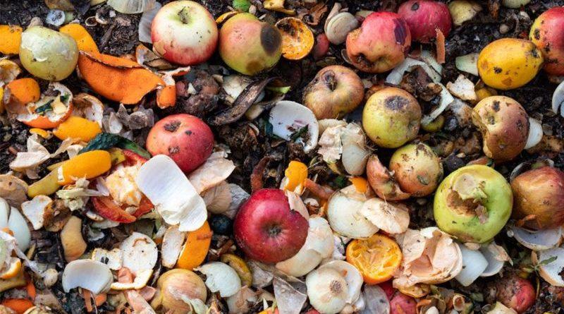 900 مليون طن من الطعام ترمى في النفايات سنويا